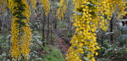 Bibbulmun Track