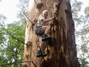 Glenys climbing Gloucester Tree