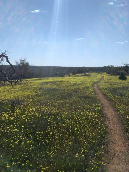 Day 2: Wildflower tour at Hi Vallee Farm, Coalseam Conservation Park and Geraldton