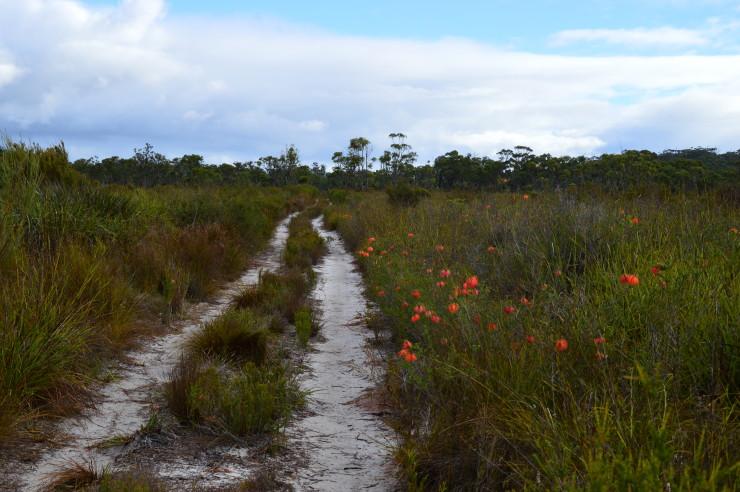 Lovely track in the Pingerup Plains Northcliffe to Walpole on the Bibbulmun Track