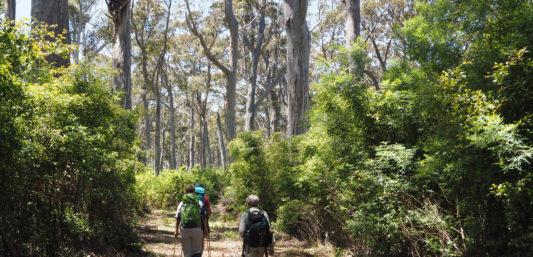 Bibbulmun Track Northcliffe to Walpole