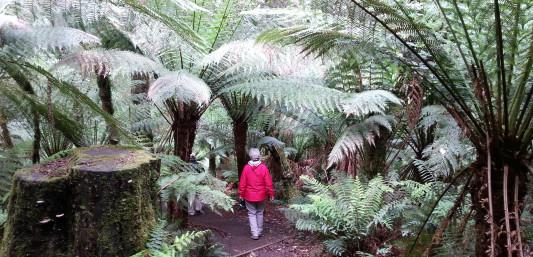 Rainforest Great Ocean Walk