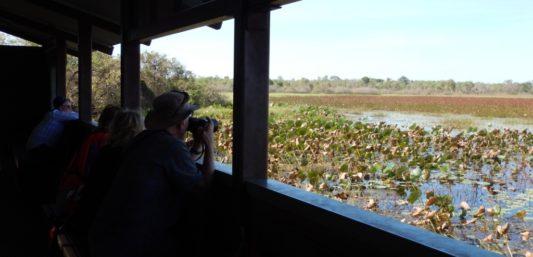 Wildlife Kakadu