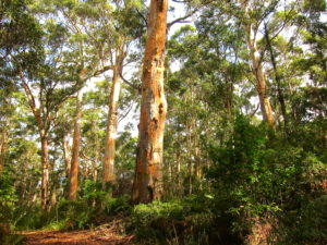 Best Hiking Trips in the South West of Western Australia