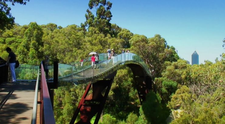 Glass Bridge Kings Park